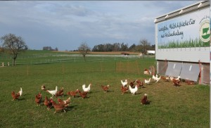 160405_dreh_hühner